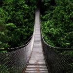 suspension bridge through the forest