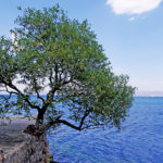 tree growing on a cliff over the water
